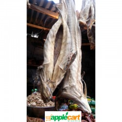 Cod stockfish (medium size)