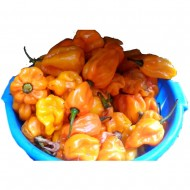 Yellow pepper- small pack