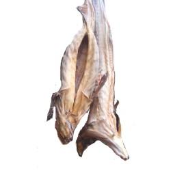 Full stockfish