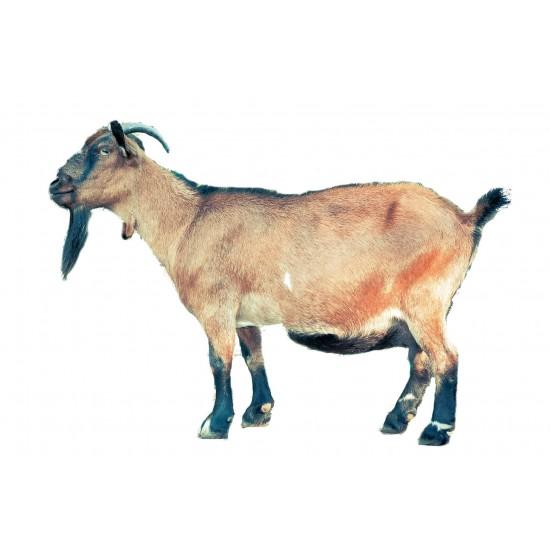 Goat share (deboned)- quarter goat