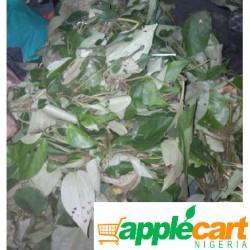 Uziza leaves: large bunch