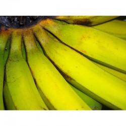 Bananas 6-8pieces