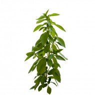 Curry leaf: small bunch
