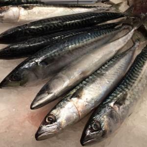 Titus fish 1kg