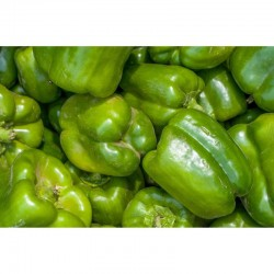 Green pepper (pack of 3)