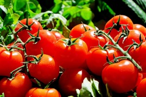 The Wonders of Tomatoes