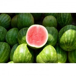 Watermelon (1 whole)
